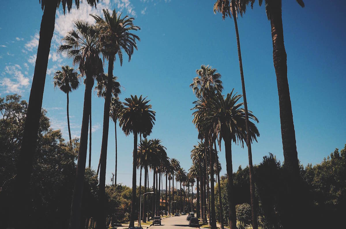 A photo of palm trees in Beverly Hills – L.A. 2014